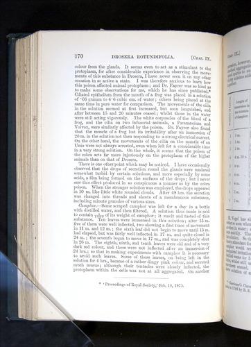 Image of Darwin-F1225-1888-170
