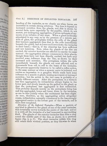 Image of Darwin-F1225-1888-197