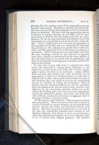 Image of Darwin-F1225-1888-210