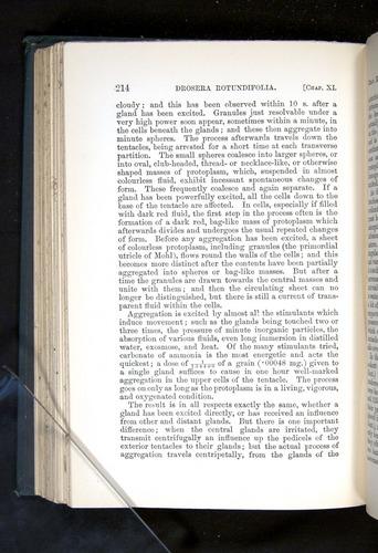 Image of Darwin-F1225-1888-214