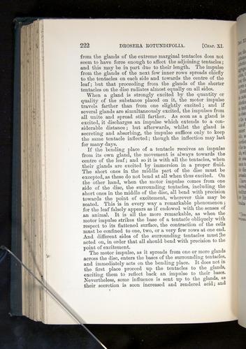 Image of Darwin-F1225-1888-222