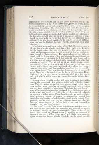 Image of Darwin-F1225-1888-228