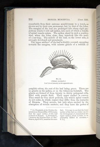 Image of Darwin-F1225-1888-232