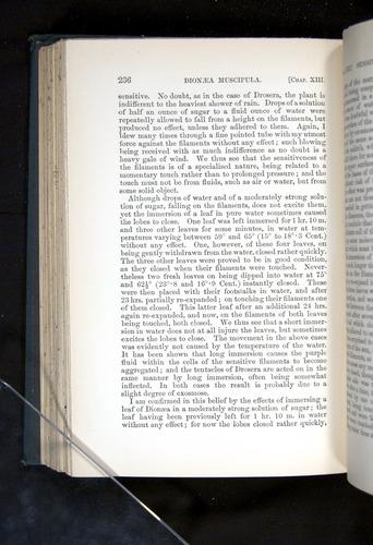 Image of Darwin-F1225-1888-236