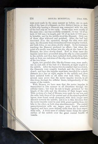 Image of Darwin-F1225-1888-254