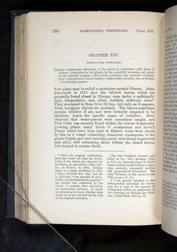 Image of Darwin-F1225-1888-260