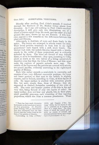 Image of Darwin-F1225-1888-261