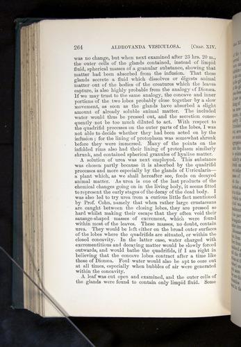 Image of Darwin-F1225-1888-264