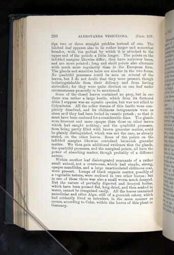Image of Darwin-F1225-1888-266