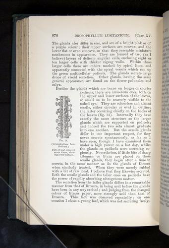 Image of Darwin-F1225-1888-270