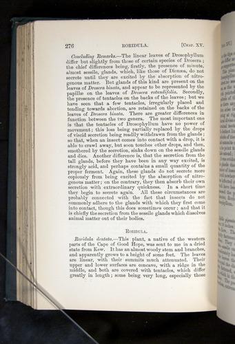 Image of Darwin-F1225-1888-276