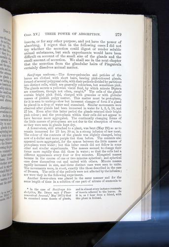 Image of Darwin-F1225-1888-279
