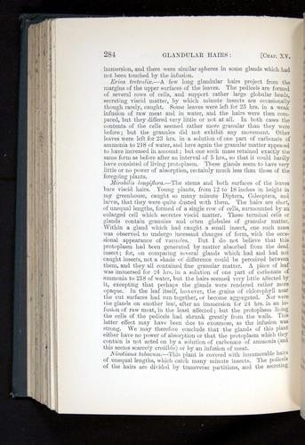 Image of Darwin-F1225-1888-284