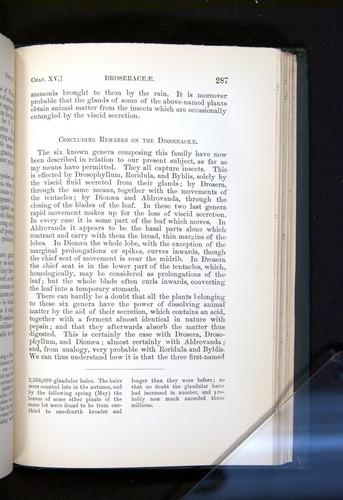 Image of Darwin-F1225-1888-287