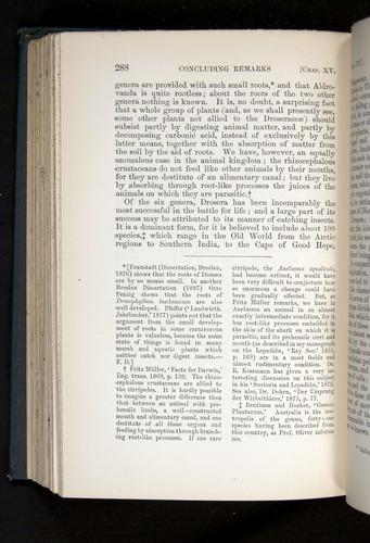 Image of Darwin-F1225-1888-288