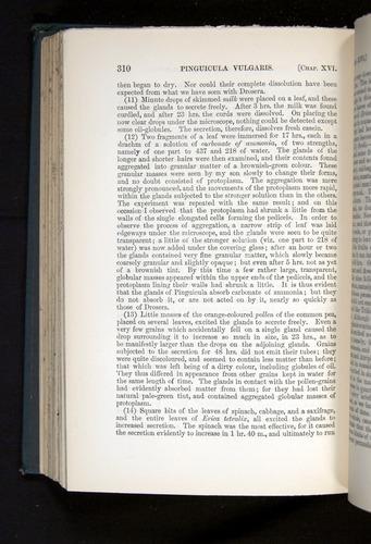 Image of Darwin-F1225-1888-310