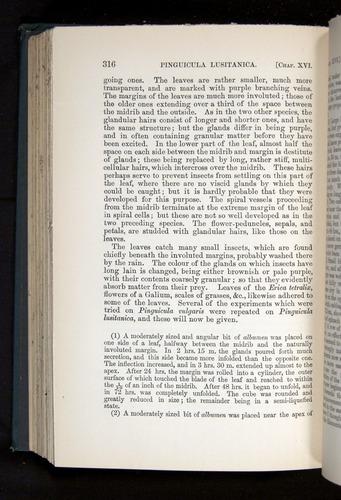 Image of Darwin-F1225-1888-316
