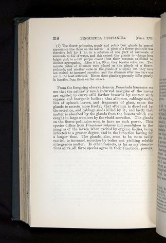 Image of Darwin-F1225-1888-318