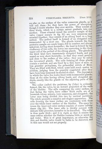Image of Darwin-F1225-1888-324