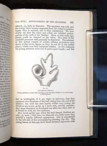 Image of Darwin-F1225-1888-343