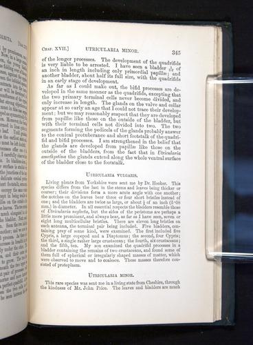 Image of Darwin-F1225-1888-345
