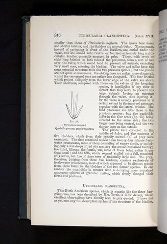 Image of Darwin-F1225-1888-346