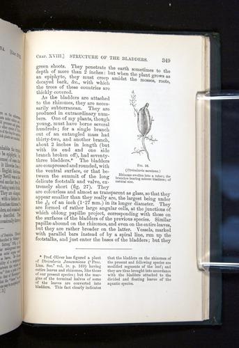 Image of Darwin-F1225-1888-349