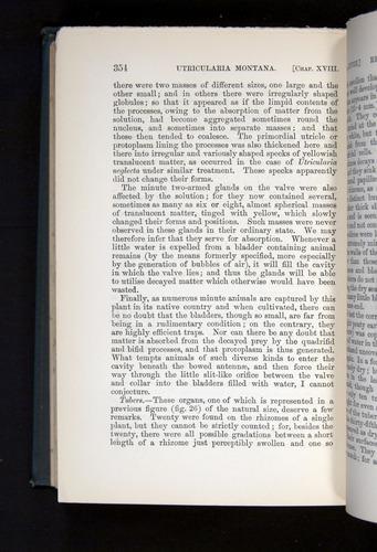 Image of Darwin-F1225-1888-354
