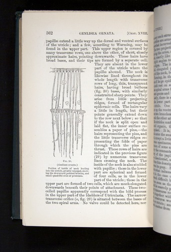 Image of Darwin-F1225-1888-362
