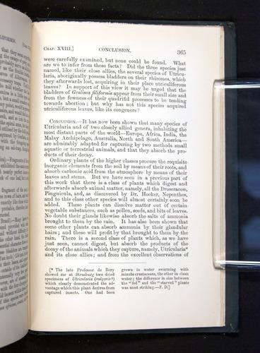 Image of Darwin-F1225-1888-365