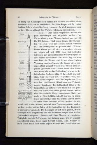 Image of Darwin-F1404-1882-010