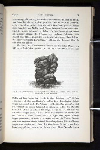 Image of Darwin-F1404-1882-071