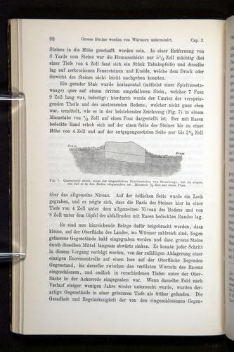 Image of Darwin-F1404-1882-088