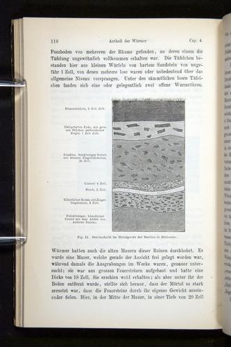 Image of Darwin-F1404-1882-118