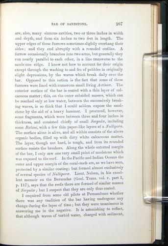Image of Darwin-F275-1874-267