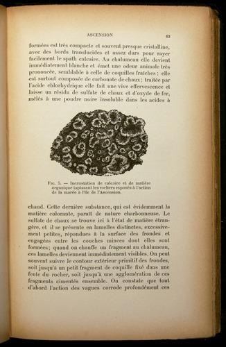 Image of Darwin-F310-1902-063