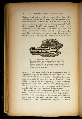 Image of Darwin-F310-1902-072