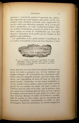 Image of Darwin-F310-1902-073