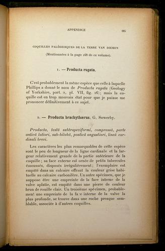 Image of Darwin-F310-1902-195