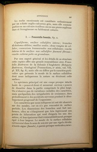 Image of Darwin-F310-1902-207