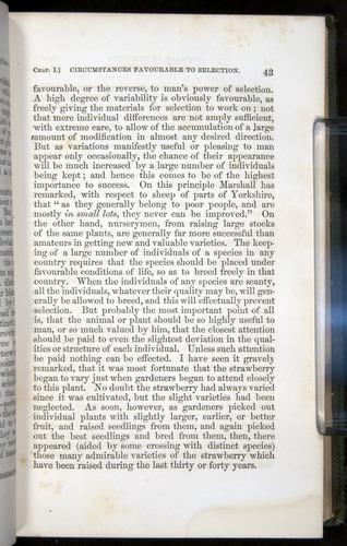 Image of Darwin-F377-1860-00043