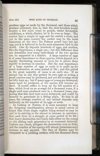 Image of Darwin-F377-1860-00065