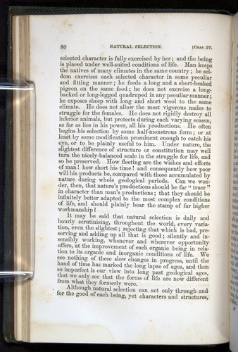 Image of Darwin-F377-1860-00080