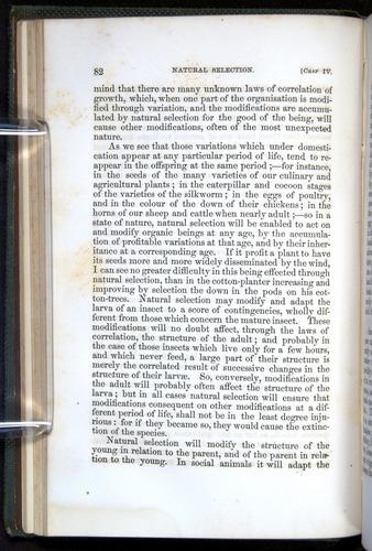 Image of Darwin-F377-1860-00082
