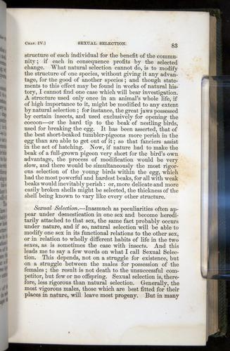 Image of Darwin-F377-1860-00083