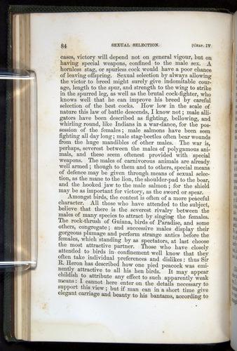 Image of Darwin-F377-1860-00084