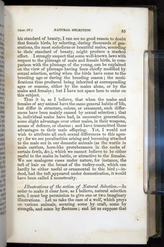 Image of Darwin-F377-1860-00085
