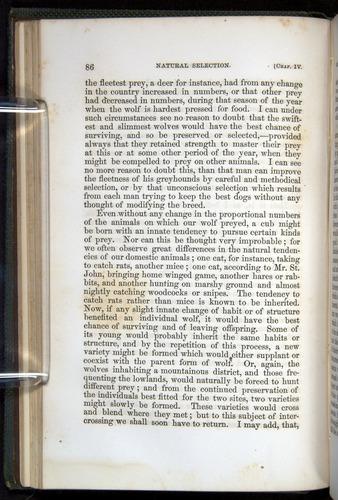 Image of Darwin-F377-1860-00086