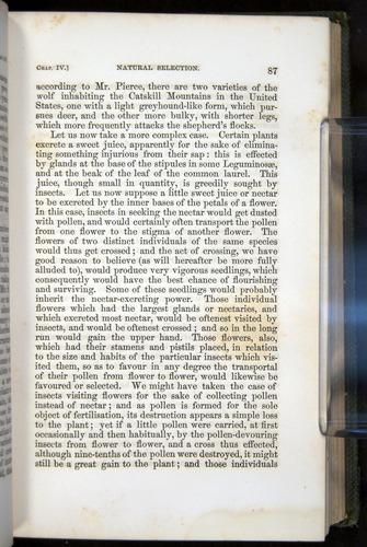 Image of Darwin-F377-1860-00087