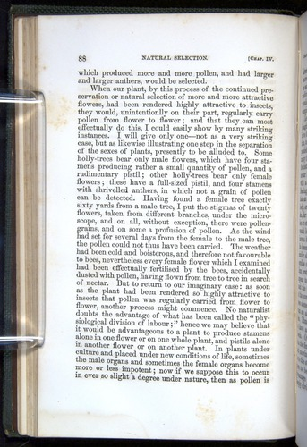 Image of Darwin-F377-1860-00088